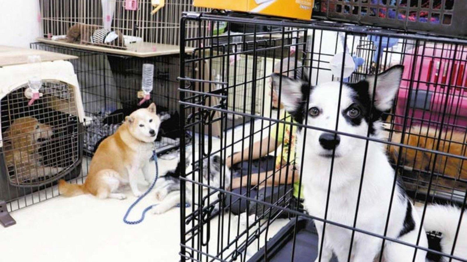 犬猫「譲渡会」に影を落とすコロナ禍の深刻影響   読売新聞