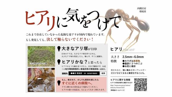 日本はヒアリの息の根を本当に止められるか
