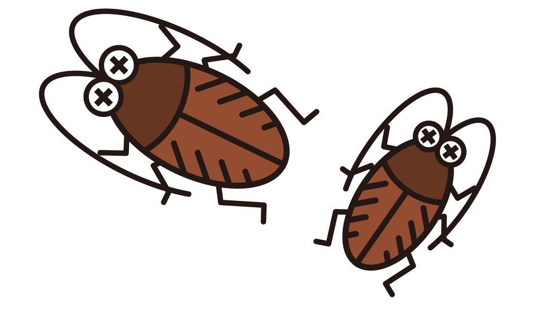 なぜゴキブリだけがこんなに嫌われるのか 深掘り医学部入試の知られ