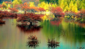 Entice the Senses with Nikko's Spectacular Autumn Colors