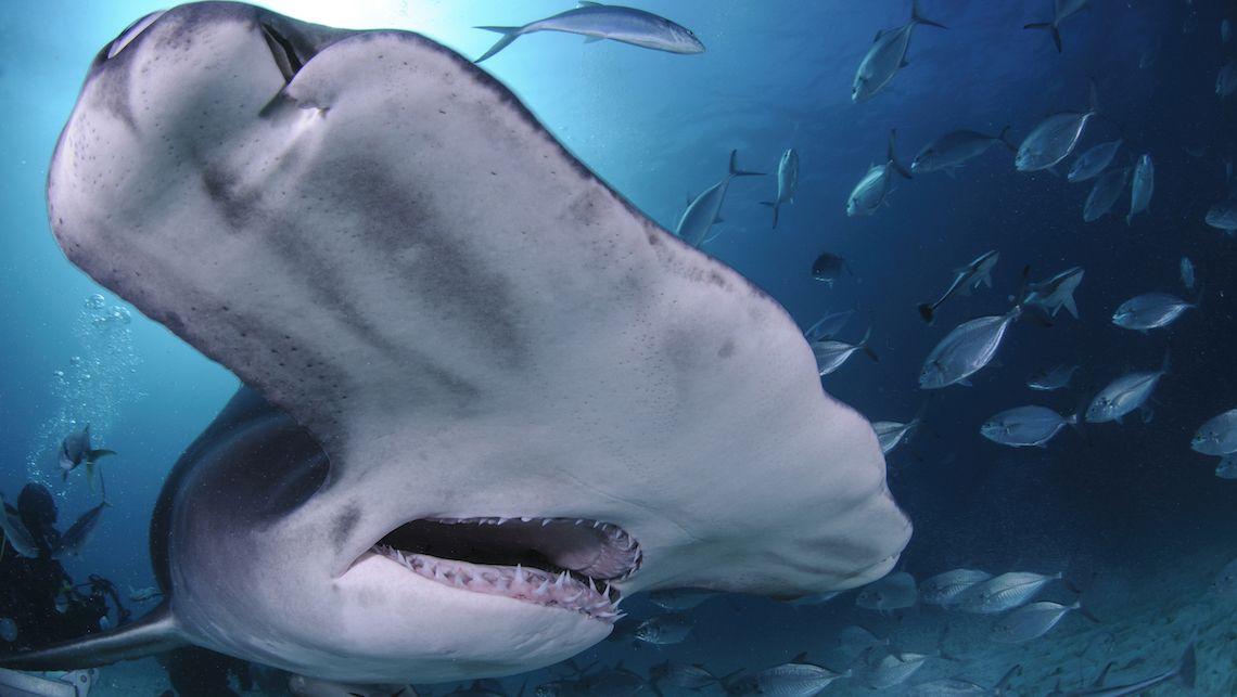サメは何類