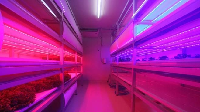 化学メーカーが植物工場に次々参入する理由